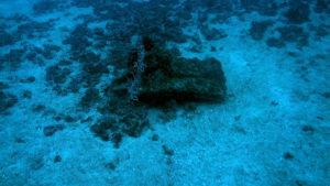 photo of Egadi 6 ram from above underwater