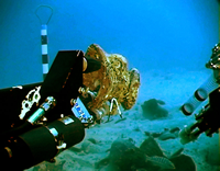 photo of RPMNF ROV exploring seafloor